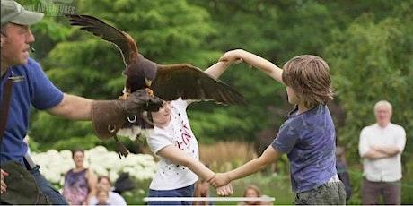 Birds of Prey Flying Show tickets