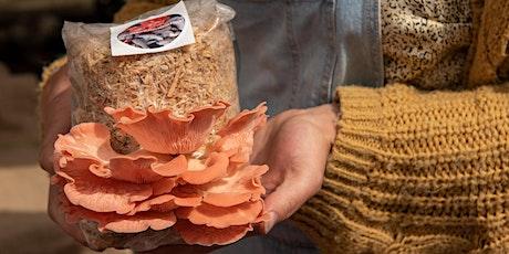 Caley Brothers Mushroom growing workshop tickets