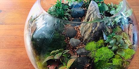 Large fish bowl terrarium workshop tickets