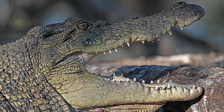 History of Saltwater Crocodile Management in the Northern Territory tickets