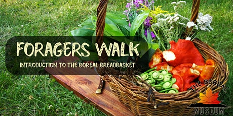 Boreal Museum's Foragers Walk tickets
