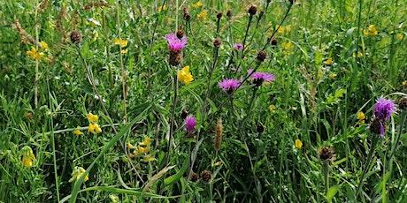 Green Space Management Pollinator Training [Online] biglietti