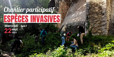 Chantier participatif : espèces invasives billets