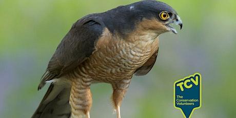 Bird Survey - The Paddock tickets