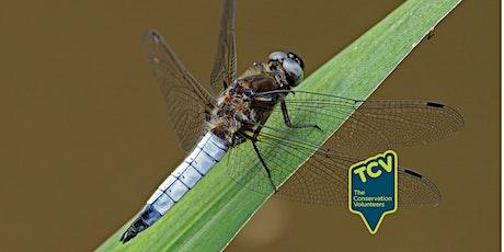 Dragonfly & Damselfly Survey  -  The Paddock tickets