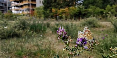 Virtual Butterfly Identification Workshop tickets