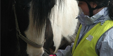 Horse Wise Holiday Club tickets