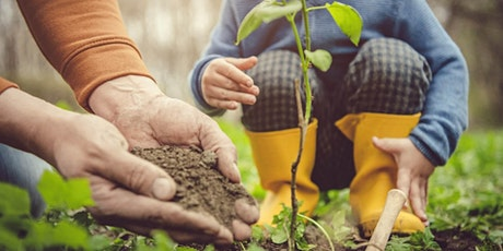 Caring for Your Young Trees: Tips for current and future health tickets
