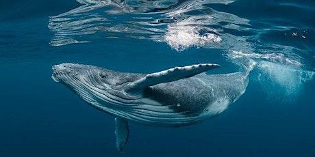 SATURDAY:  vSketch - Under the Sea tickets