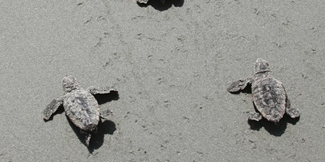 Ossabaw Island: Coastal Ecology and Turtles Day Trip:  Saturday, August 28 tickets