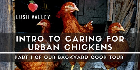 Intro to Caring for Urban Chickens tickets