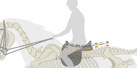 Biomechanics of the Equine Back with and without a Rider tickets