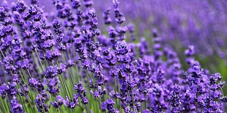Let's Talk About Lavender! tickets