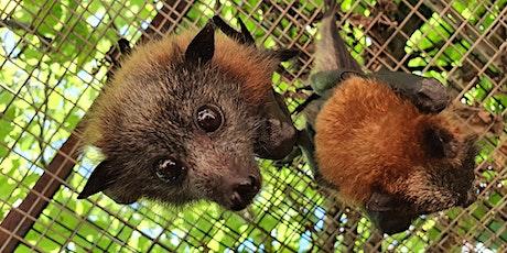 Explore Bat World tickets