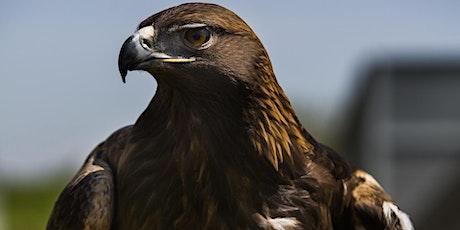 OWL Rehabilitation Society  - Virtual Summer Camp tickets