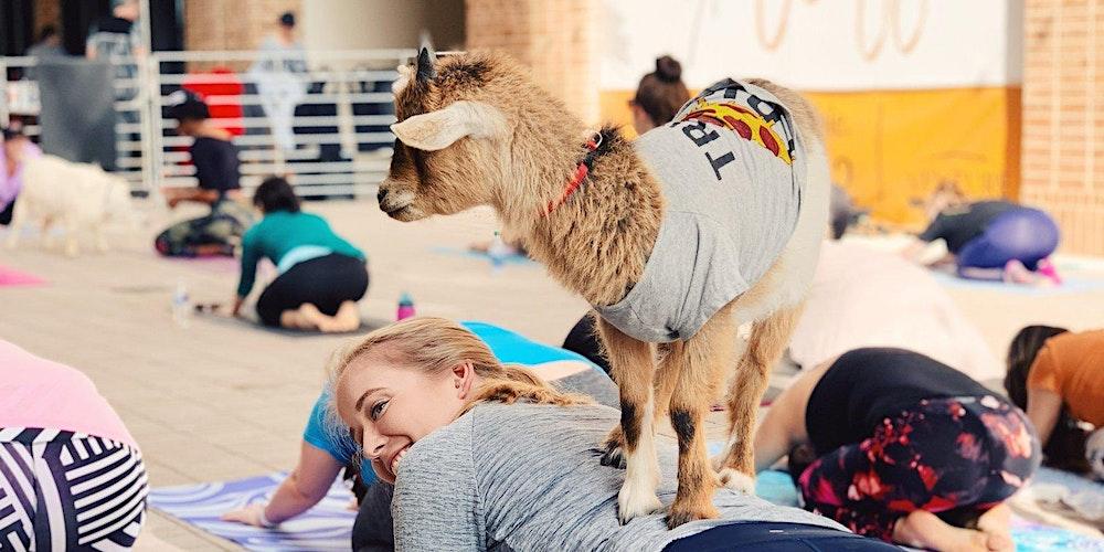 Halloween Costume Goat Yoga Addison Circle! Tickets, Sat, Oct 16, 2021 at  10:00 AM | Eventbrite
