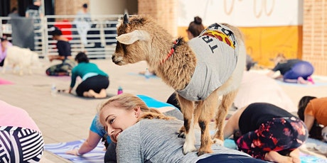 Holiday Goat Yoga Addison Circle! tickets