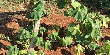 Hot Enough For You? Vegetable Gardening in Summer Heat tickets