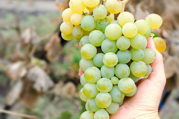 蒙著眼睛去旅行 MyiCellar 世界巡迴盲品試酒會 第一站 Chardonnay | MyiCellar 雲窖 image