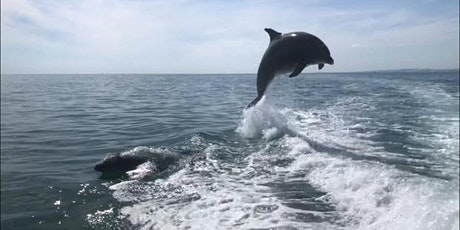 Dolphin Ecology Workshop tickets