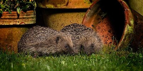 Great Fen Wildlife Watch - Hibernation Helpers tickets