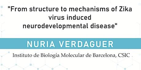 From structure to mechanisms of Zika induced neurodevelopmental disease tickets