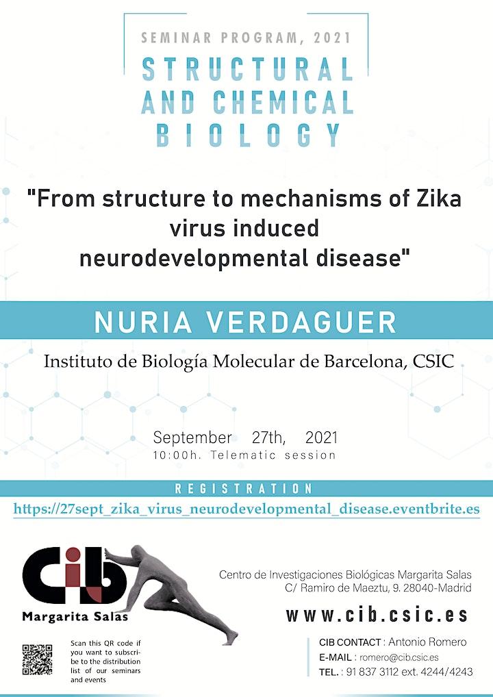 Imagen de From structure to mechanisms of Zika induced neurodevelopmental disease