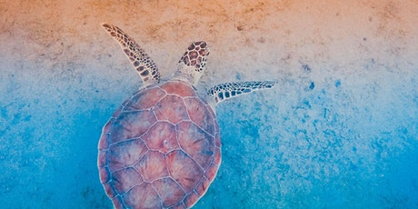 Sea Turtle Art Extravaganza with Curated Care tickets