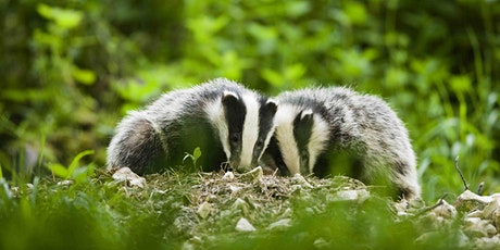 Family Badger Watch at Falls of Clyde tickets