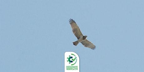 Giovedì del Parco: grandi rapaci e migrazioni biglietti