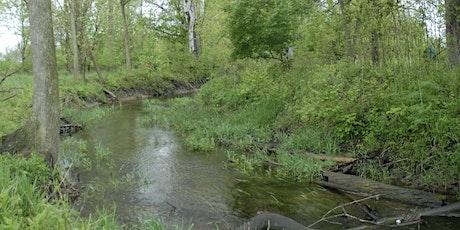 Dragonflies and Wetlands - Cedar Run Conservation tickets