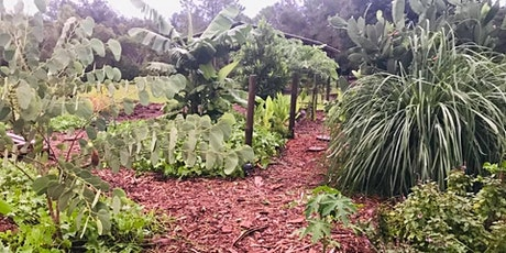 Basic Permaculture  in Central Florida - Growing and Eating Your Own Food!! tickets