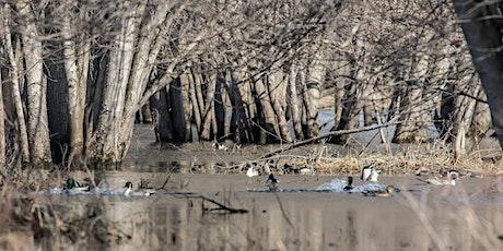 Hatfield Swamp Birding in November tickets