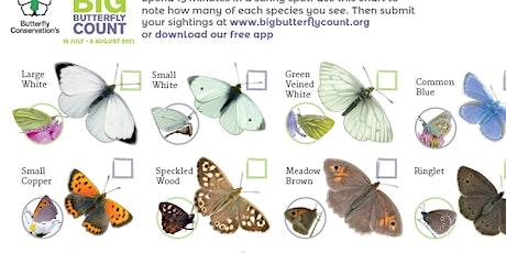 Native Butterfly Identification  & Survey Training tickets