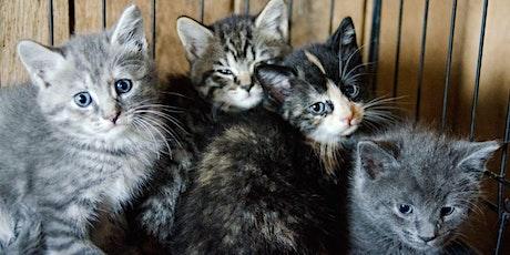 Come adopt a cat entradas