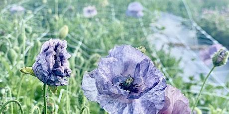 Blooms on 7 U-PICK tickets
