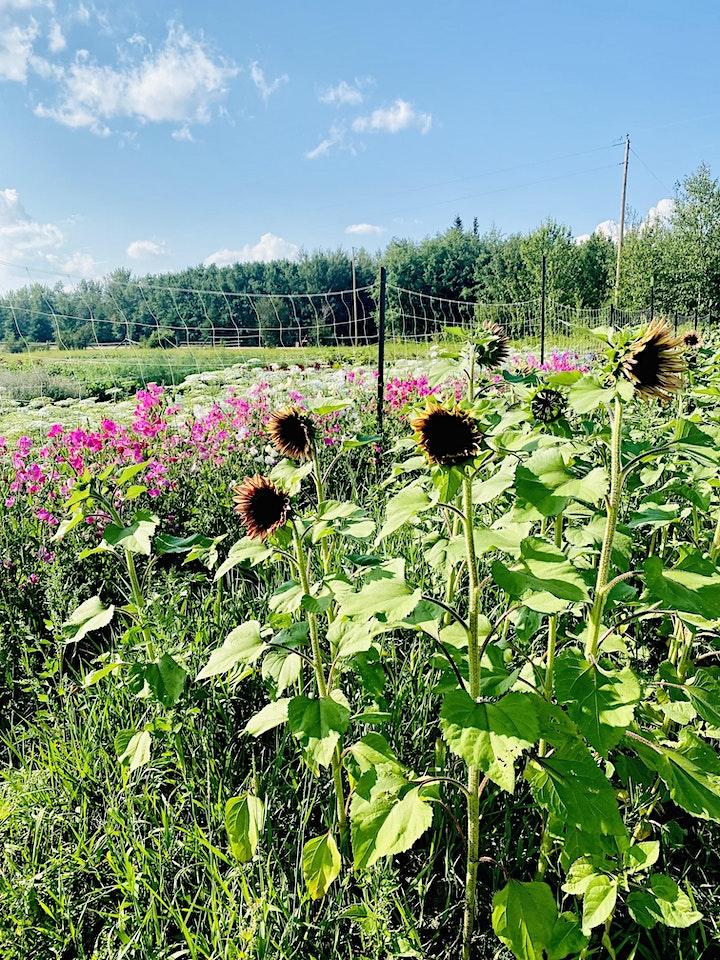 Blooms on 7 U-PICK image