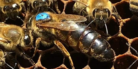 Varroa mite and how to keep your honeybees alive! tickets