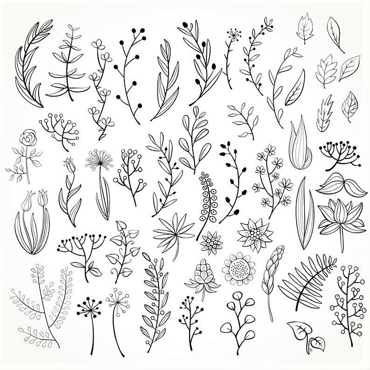 Doodling Botanicals,  Class for Teens and Adults image