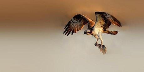 The Cape Cod Osprey Project: Voyeuristic Citizen Science tickets