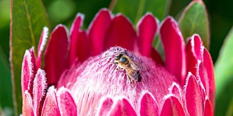 Bird, Bee and Butterfly Gardening tickets