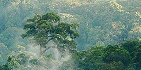 The Rainforests of Borneo - Talk by Dr Glen Reynolds tickets
