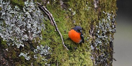 Macedon Ranges Field Naturalists Birdwatching for Beginners tickets