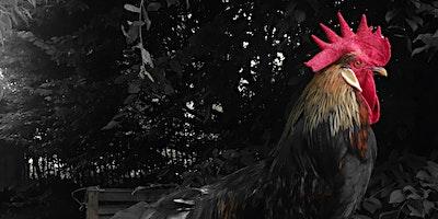 Atelier Chant du Coq: chant vibratoire et yoga du souffle à l'aube