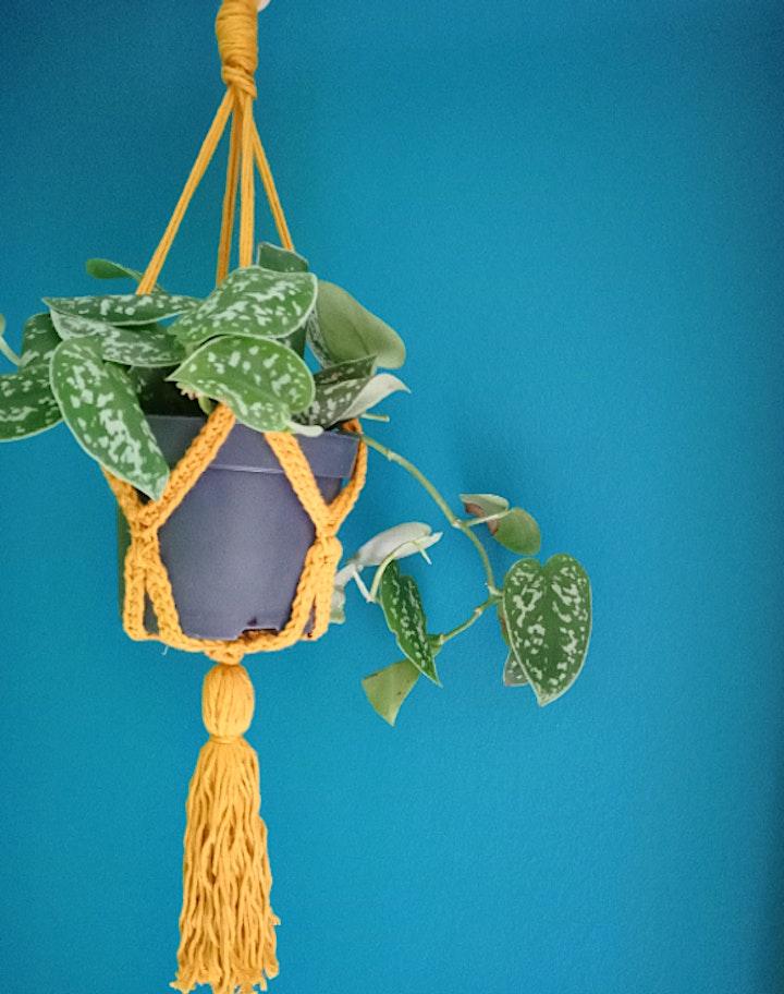 Crochet your own plant hanger image