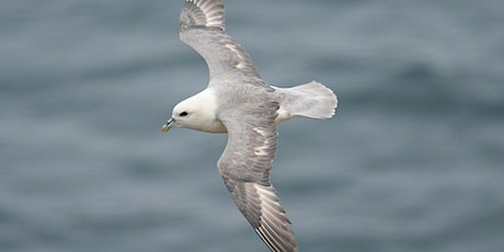 From Bay to Bay: The Seabird Trail   - Autumn Walking Week tickets