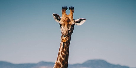 Painting safari animals for children and young people-Giraffe tickets