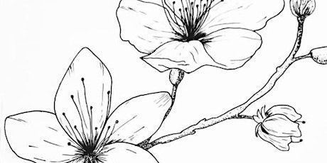 Doodling a Flower Branch,  Class for Teens and Adults tickets