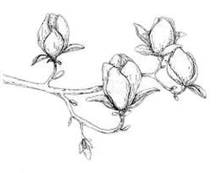 Doodling a Flower Branch,  Class for Teens and Adults image