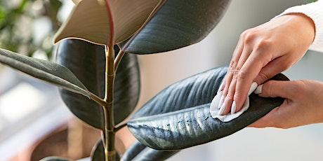 Indoor Plant Pest Control tickets